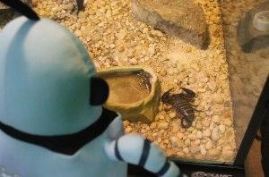 Kelvin with Scorpion