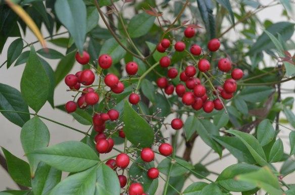 Food For Wildlife - Berries!