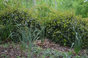 Ground Cover in the Zoo