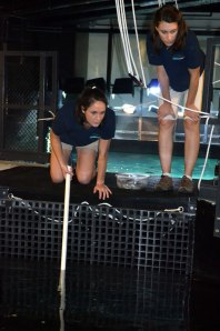 Sarah (right) and Caitlyn (left) Feeding Eels and Rays