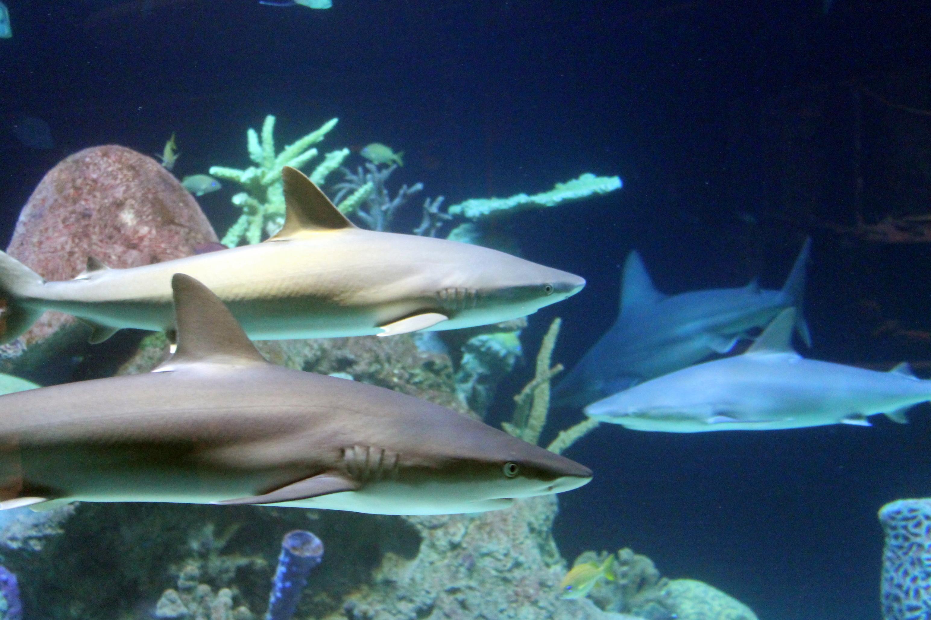 it�s shark week greensboro science center