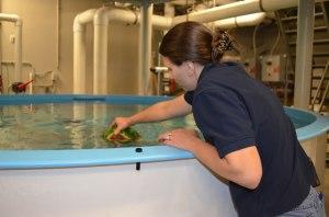 Sarah Sinking a Watermelon