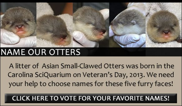 Name Our Otters