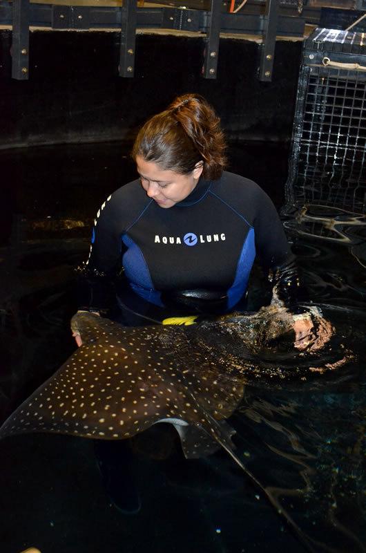 Lyssa with Eagle Ray
