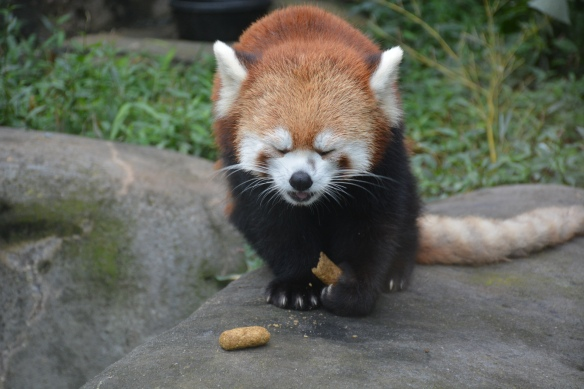 Tai Eating Breakfast