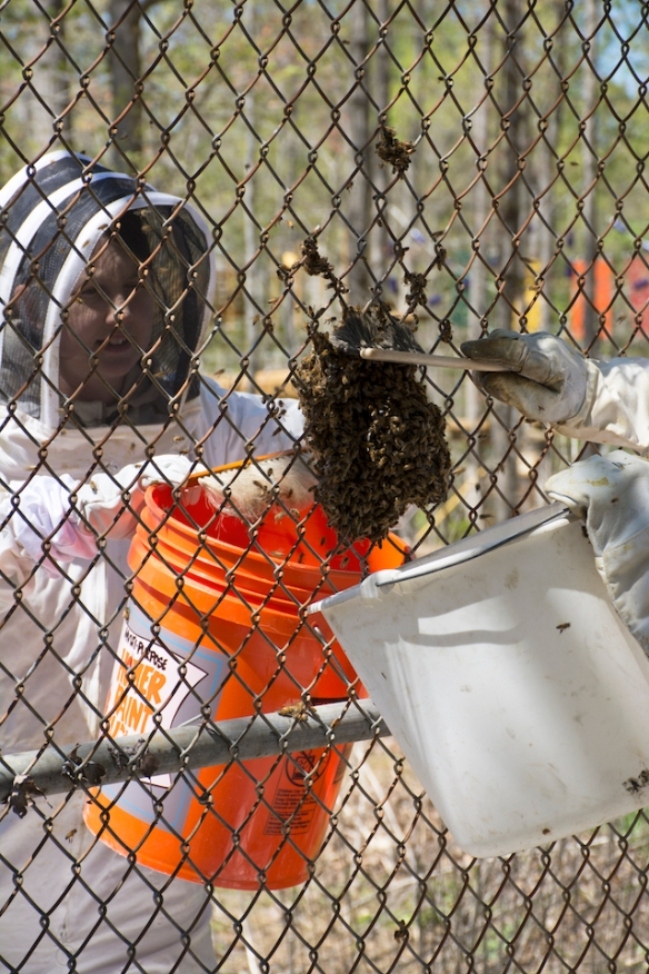 Removing Hive from Fence