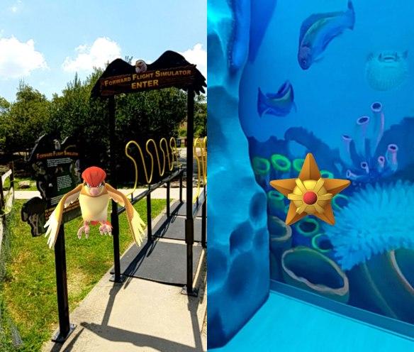 Pokemon Go - Pidgeotto and Staryu