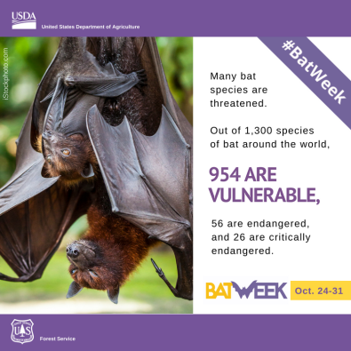 #BatWeek-Endangered