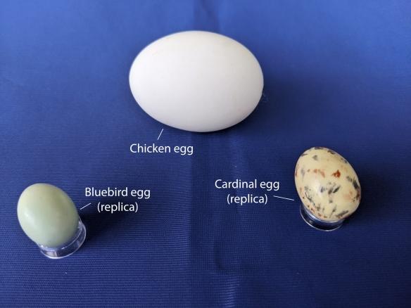 Eggs-Bluebird-Chicken-Cardinal