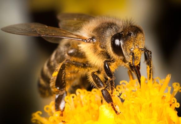 bee pollinator shutterstock_110485346